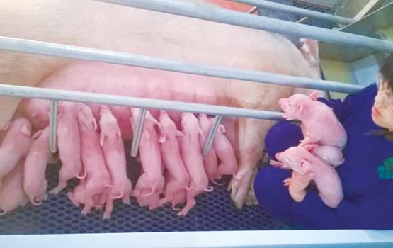猪耳缺国际读法图解